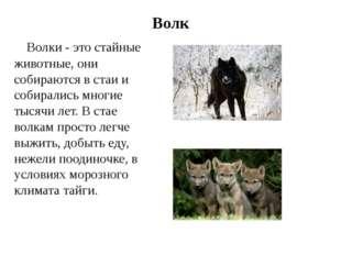 Волк Волки - это стайные животные, они собираются в стаи и собирались многие