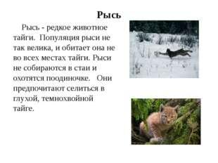 Рысь Рысь - редкое животное тайги. Популяция рыси не так велика, и обитает он