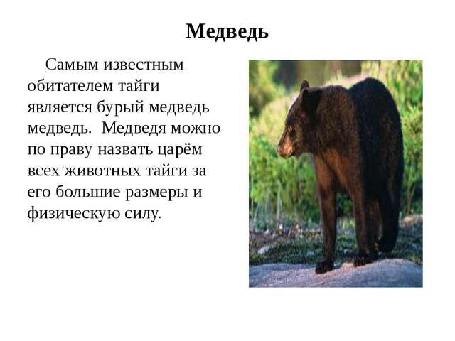 Медведь Самым известным обитателем тайги является бурый медведь медведь. Медв...