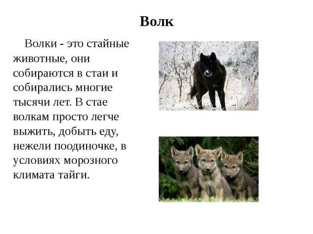 Волк Волки - это стайные животные, они собираются в стаи и собирались многие...