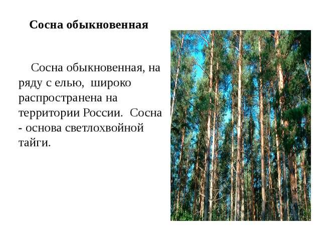 Сосна обыкновенная Сосна обыкновенная, на ряду с елью, широко распространен...