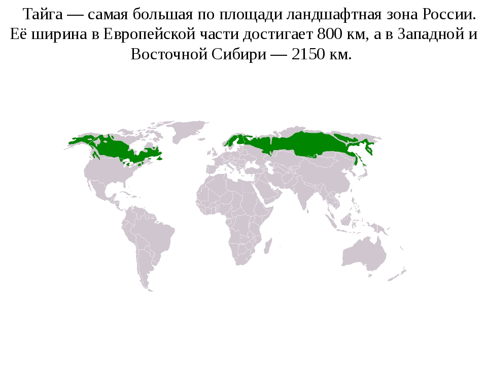 Тайга— самая большая по площади ландшафтная зонаРоссии. Её ширина в Европе...