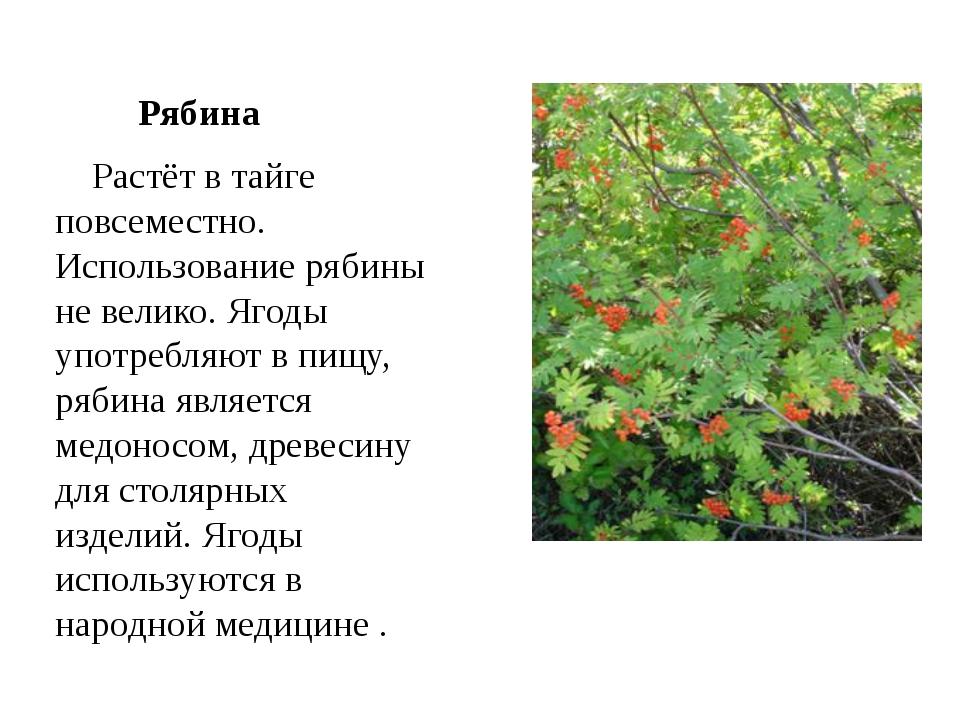 Рябина  Растёт в тайге повсеместно. Использование рябины не велико. Ягоды у...