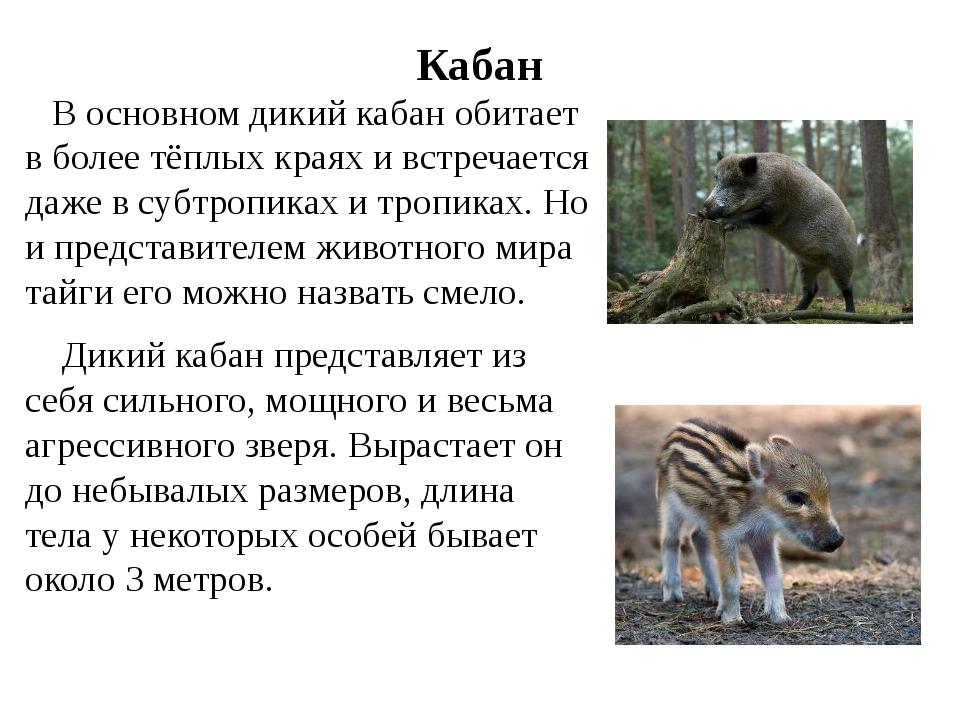 Кабан В основном дикийкабан обитает в более тёплых краяхи встречается даже...