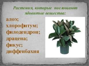 Растения, которые поглощают ядовитые вещества: алоэ; хлорофитум; филодендрон;