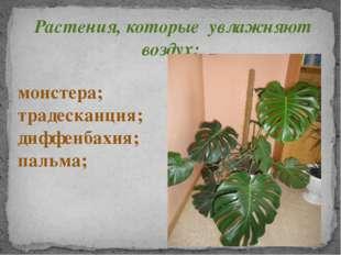 Растения, которые увлажняют воздух: монстера; традесканция; диффенбахия; паль