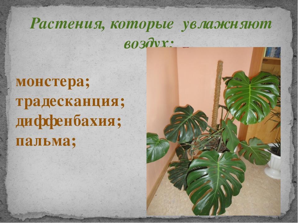 Растения, которые увлажняют воздух: монстера; традесканция; диффенбахия; паль...