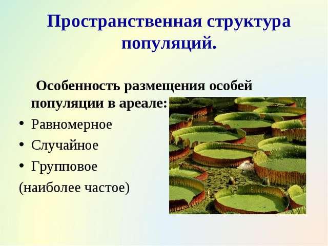Пространственная структура популяций. Особенность размещения особей популяции...