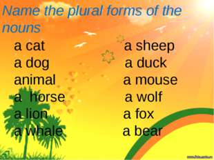 Name the plural forms of the nouns a cat a sheep a dog a duck animal a mouse