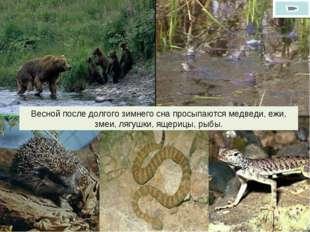 Весной после долгого зимнего сна просыпаются медведи, ежи, змеи, лягушки, яще