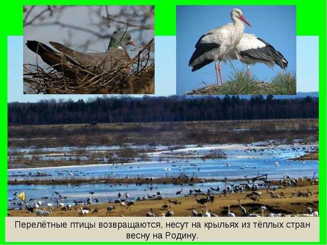 Перелётные птицы возвращаются, несут на крыльях из тёплых стран весну на Роди...