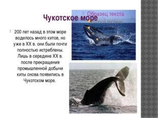 Чукотское море 200 лет назад в этом море водилось много китов, но уже в XX в.
