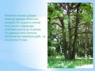 Вязовская вековая дубрава- памятник природы областного значения. Это редкий в