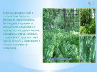 Мало распространенный в степной зоне тип леса- Вязовский черно-ольшаник. Набл