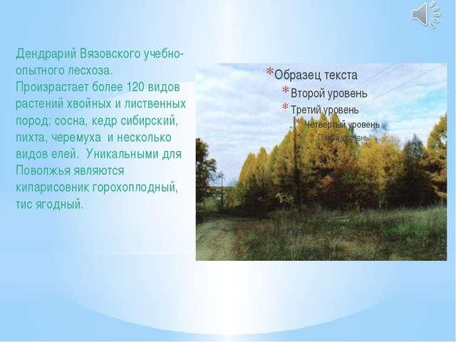 Дендрарий Вязовского учебно-опытного лесхоза. Произрастает более 120 видов ра...