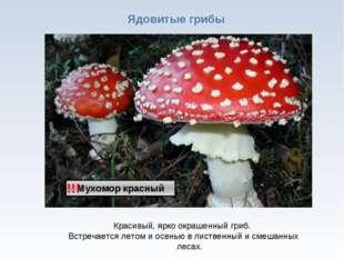 * Ядовитые грибы !!! Красивый, ярко окрашенный гриб. Встречается летом и осен