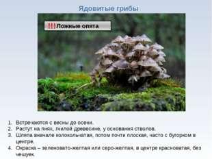 * Ядовитые грибы !!! Встречаются с весны до осени. Растут на пнях, гнилой дре