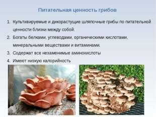 * Питательная ценность грибов Культивируемые и дикорастущие шляпочные грибы п