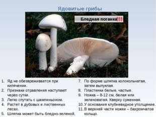 * Ядовитые грибы !!! Яд не обезвреживается при кипячении. Признаки отравления