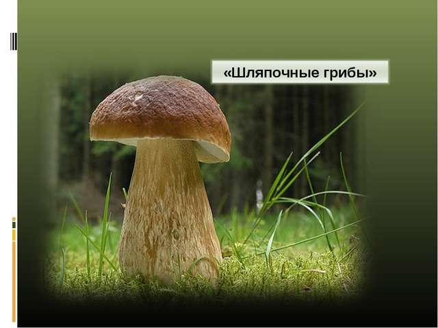 """биологии """"Шляпочные грибы"""""""