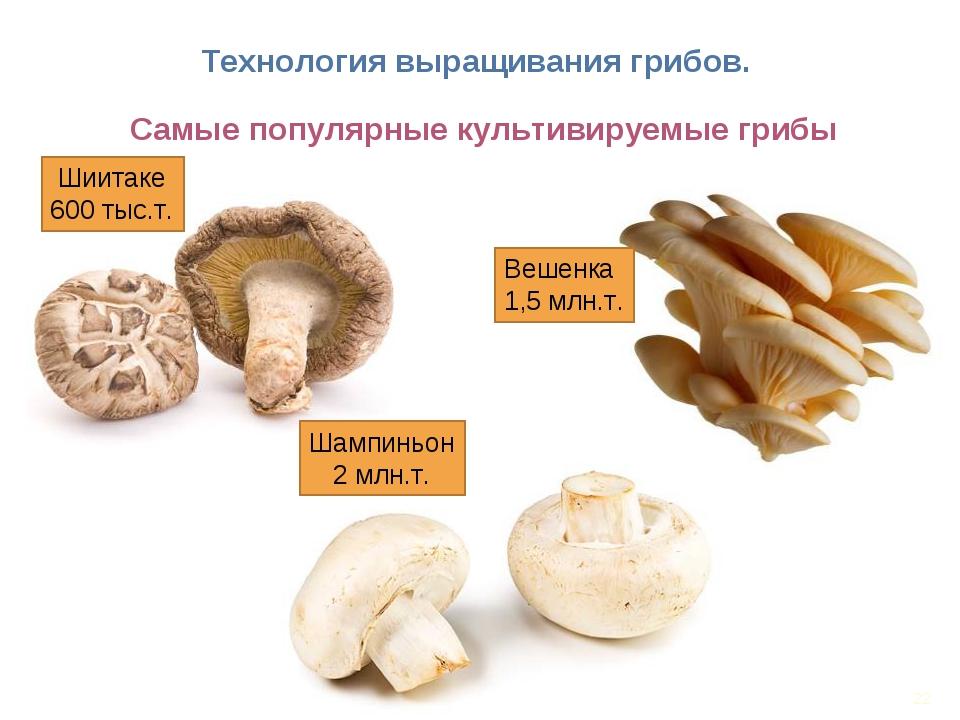 * Технология выращивания грибов. Самые популярные культивируемые грибы Вешенк...