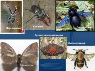 Паук агриопа Жук-олень Бабочка-ослик Орденская лента малиновая Пчела-плотник