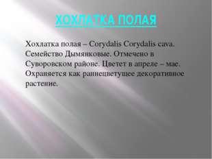 ХОХЛАТКА ПОЛАЯ Хохлатка полая – Corydalis Corydalis cava. Семейство Дымянковы