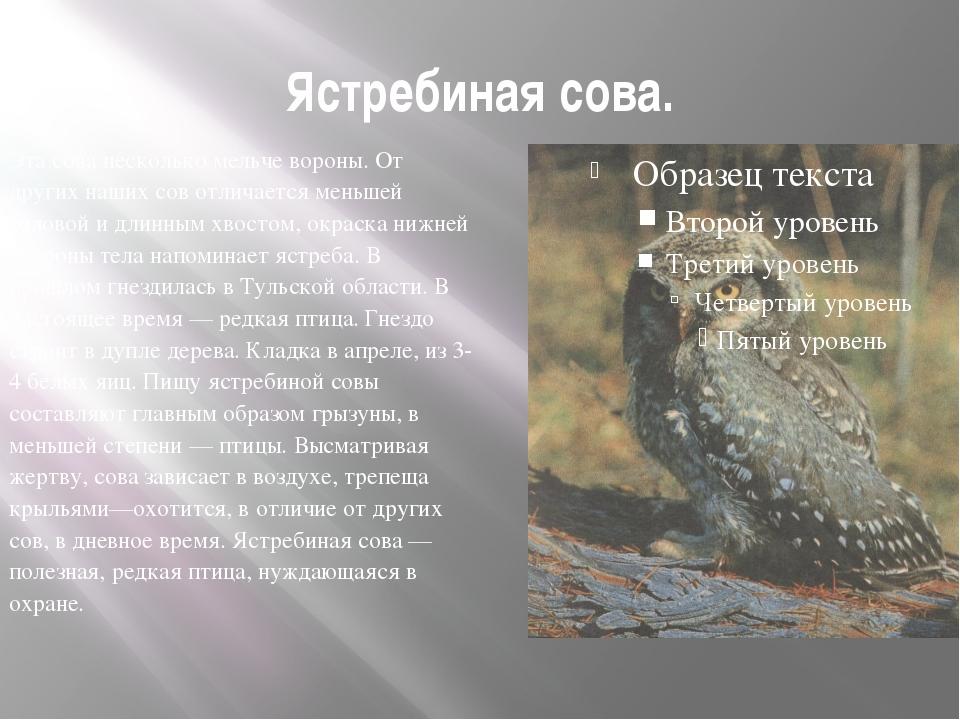 Ястребиная сова. Эта сова несколько мельче вороны. От других наших сов отлича...