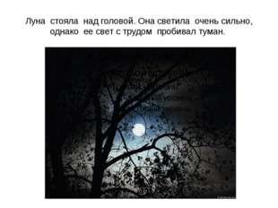 Луна стояла над головой. Она светила очень сильно, однако ее свет с трудом пр