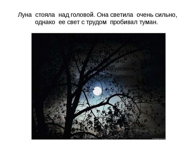 Луна стояла над головой. Она светила очень сильно, однако ее свет с трудом пр...