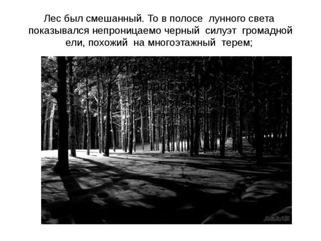 Лес был смешанный. То в полосе лунного света показывался непроницаемо черный...