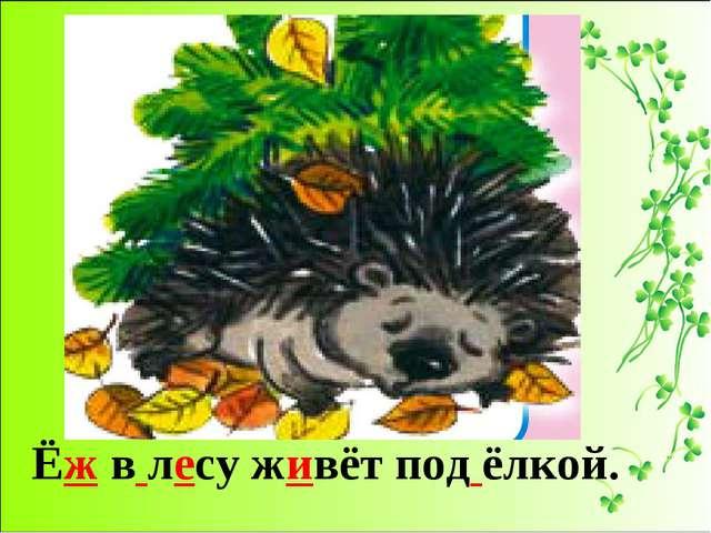 Ёж в лесу живёт под ёлкой.