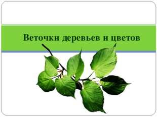 Веточки деревьев и цветов