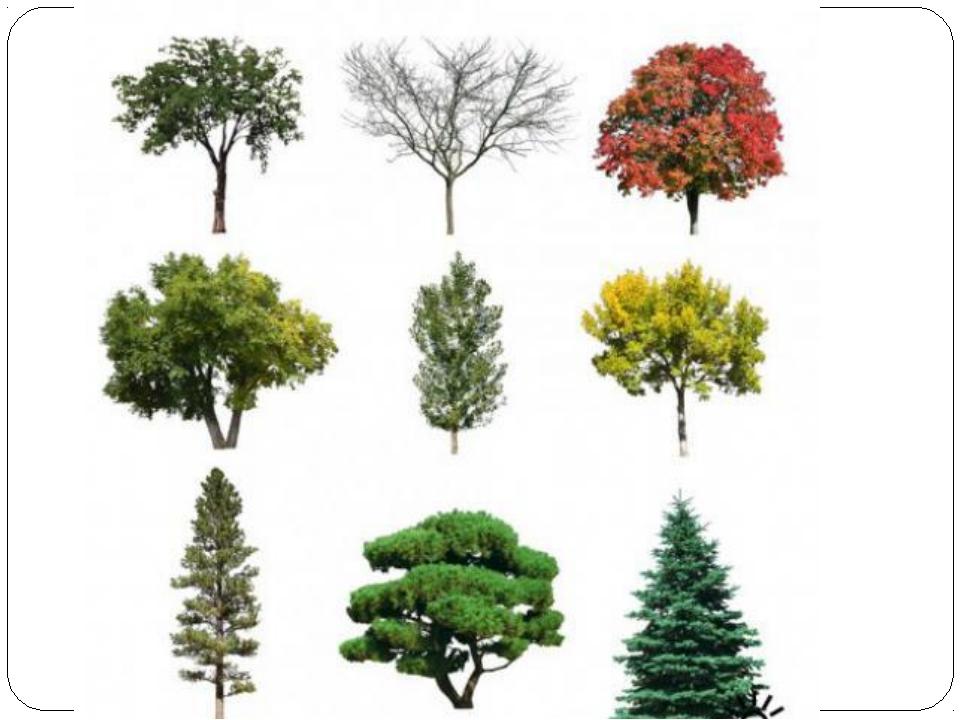 деревья в картинках их сборка домом