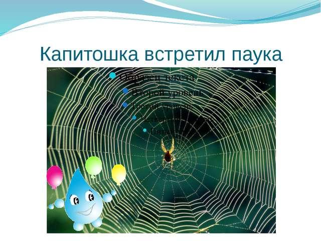 Капитошка встретил паука