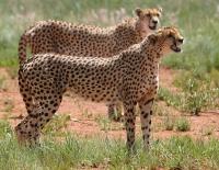 Интересные факты об Африканских животных