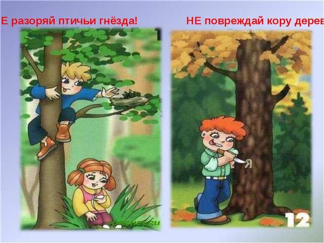 НЕ разоряй птичьи гнёзда! НЕ повреждай кору деревьев!