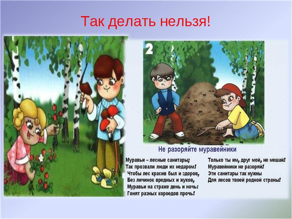 Почему растения в.лесу не.мешают друг другу