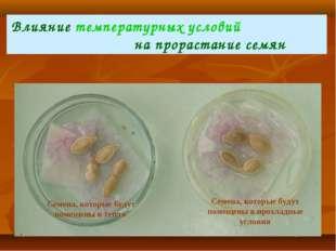 Влияние температурных условий на прорастание семян Семена, которые будут поме