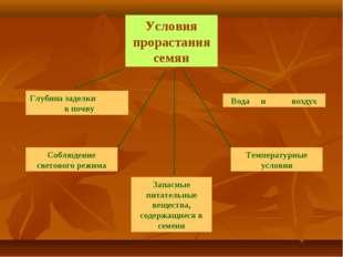Условия прорастания семян Запасные питательные вещества, содержащиеся в семен
