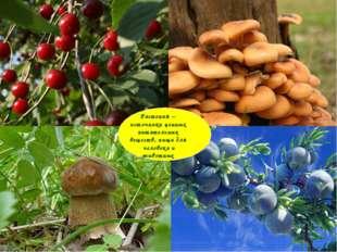 Растения – источники ценных питательных веществ, пища для человека и животных