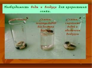 Сухие семена Семена, залитые водой без доступа воздуха Семена, смоченные водо