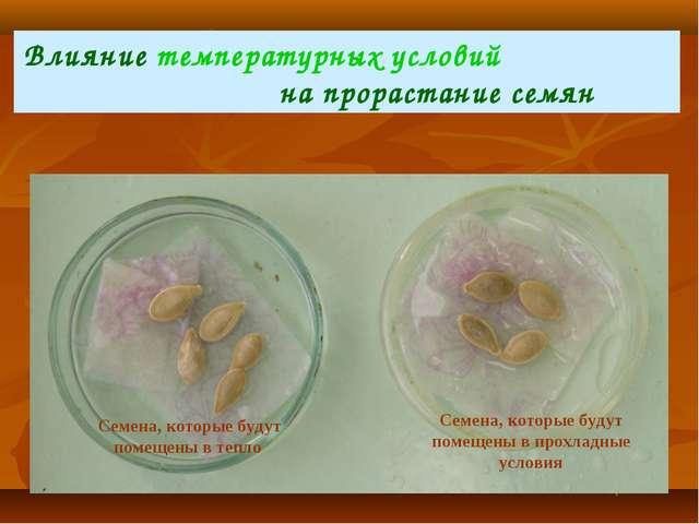 Влияние температурных условий на прорастание семян Семена, которые будут поме...