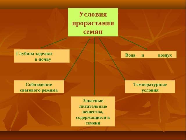 Условия прорастания семян Запасные питательные вещества, содержащиеся в семен...
