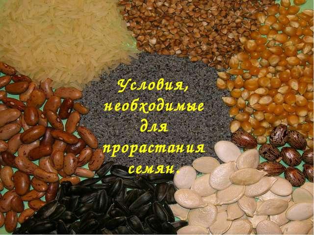 Условия, необходимые для прорастания семян.