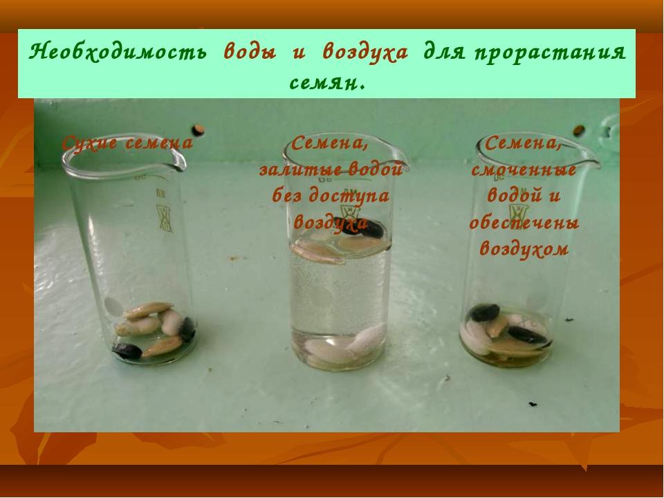 Сухие семена Семена, залитые водой без доступа воздуха Семена, смоченные водо...