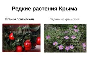 Редкие растения Крыма Иглица понтийская Ладанник крымский