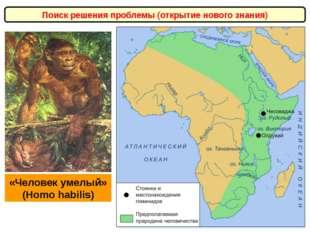 Поиск решения проблемы (открытие нового знания) «Человек умелый» (Homo habili