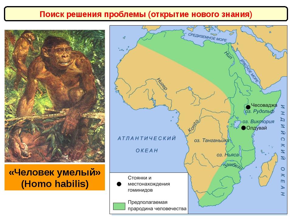 Поиск решения проблемы (открытие нового знания) «Человек умелый» (Homo habili...