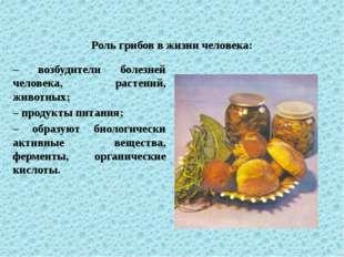 Роль грибов в жизни человека: – возбудители болезней человека, растений, живо